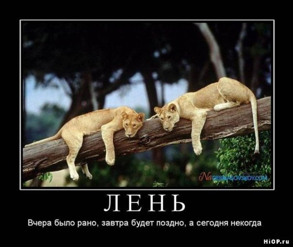 Львы демотиваторы