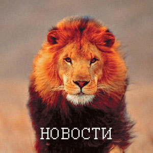 Lev_news.jpg